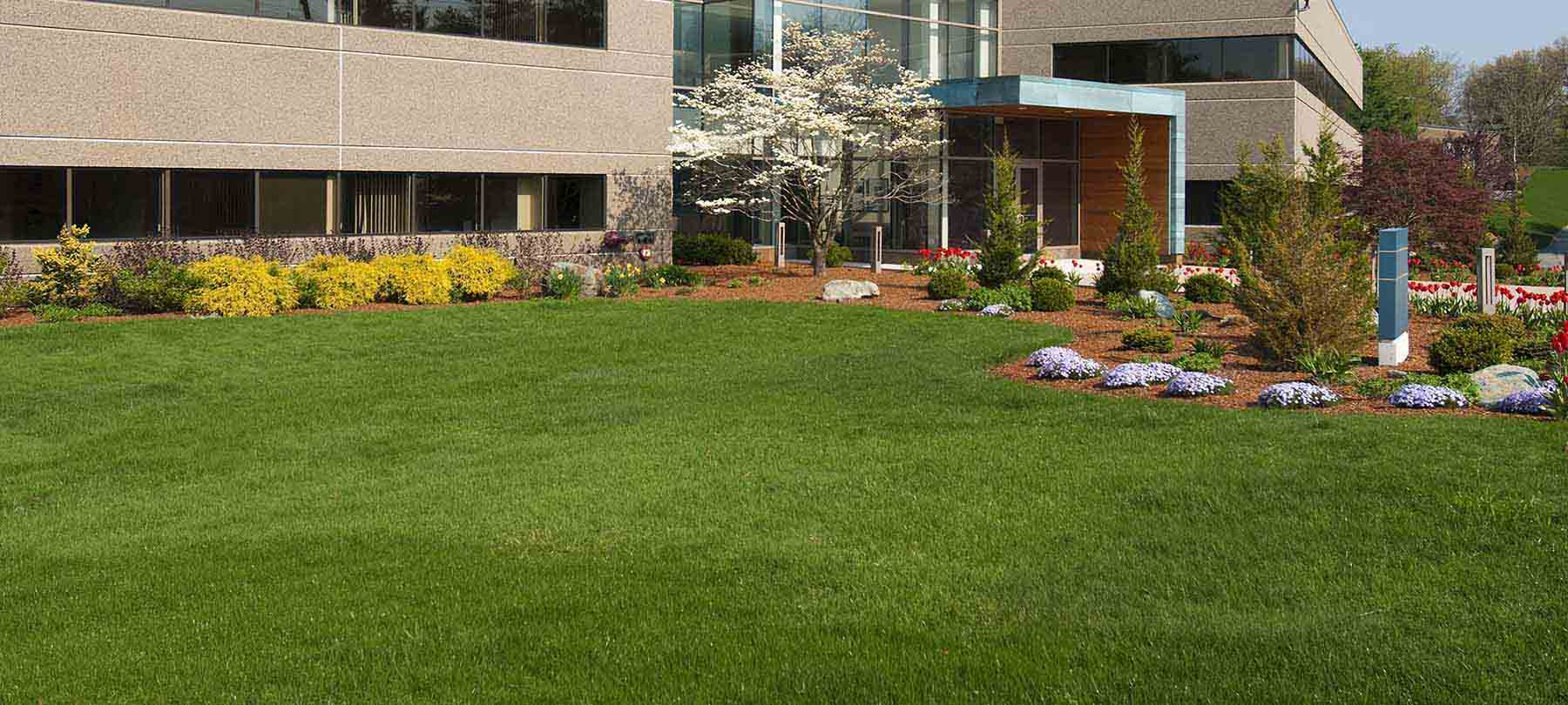 yard works - commercial landscaping services