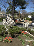 Plantings Lexington MA