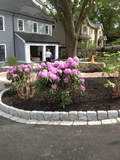 Rhododendron Plantings Lexington MA