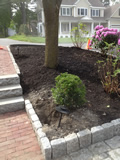 Planting in Lexington MA