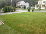 New Sod Lawn Lexington MA